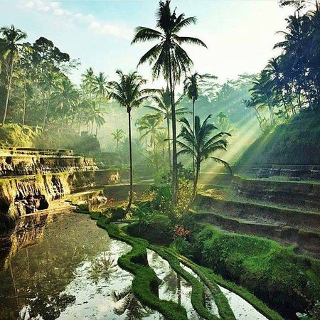 "Supir ""Ubud Friendly"""