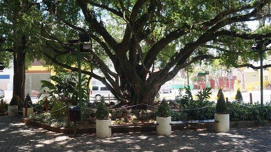 Camboriu, SC: Praça das figueiras e seus belos bancos