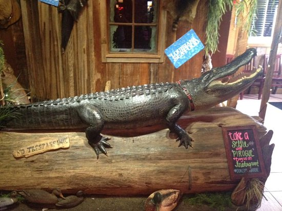 Hammond, LA: Alligatore all'ingresso