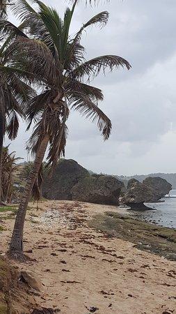 Bathsheba, Barbados: Напоминает Сейшеллы, но какие-то дикие