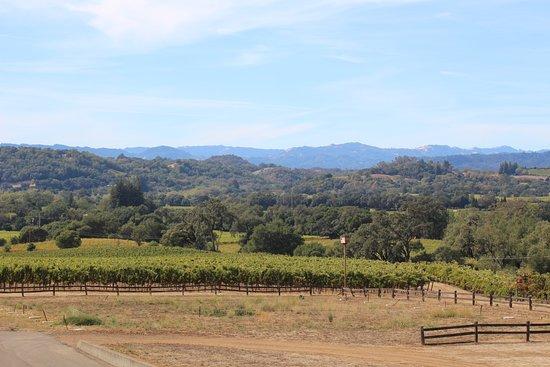 Hanna Winery: Stunning views