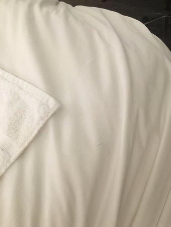 The Westin Cincinnati: Another hair on sheet