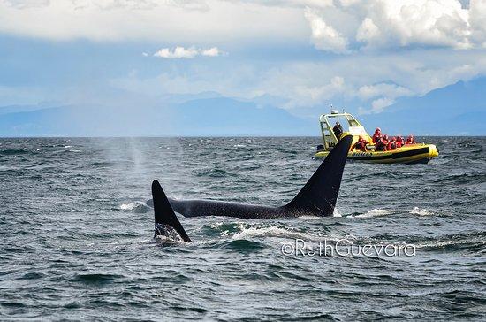 Richmond, Kanada: Vancouver Whale Watch