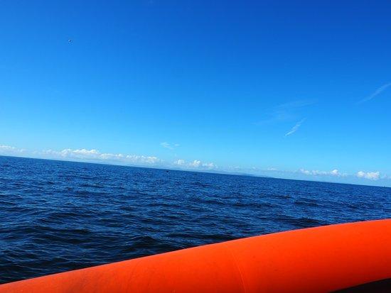 Gairloch, UK: 2 Minke Whale ,al fondo
