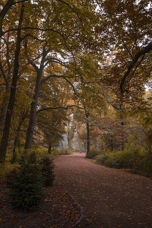 Empty path in Treptower Park