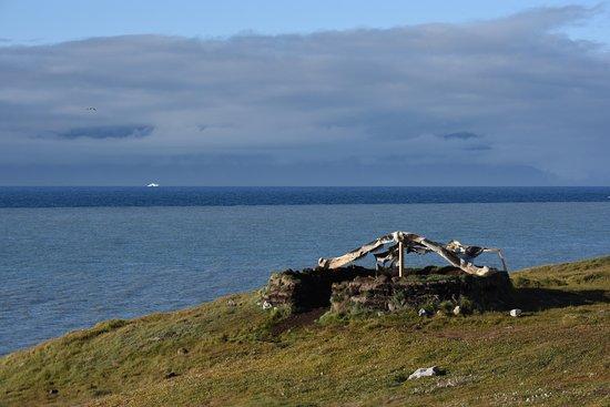 Baffin Island: Seal skin drying on a bowhead whale bone