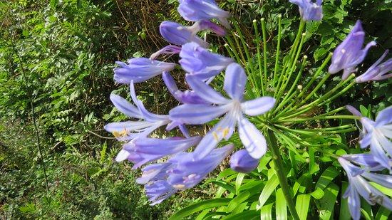 Newmarket-on-Fergus, Ireland: walled garden: flowers