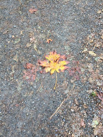 North Vancouver, Canada: Fall nature in the park