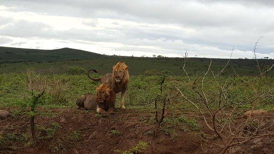 Santa Lúcia, África do Sul: 20161019_071637_large.jpg