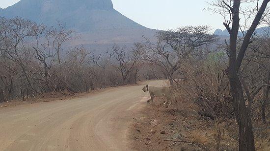 Waterberg, Sudáfrica: 20161008_175728(0)_large.jpg
