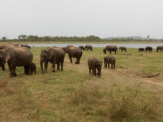 Katunayake, Sri Lanka: DSCN0721_large.jpg