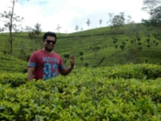 Katunayake, Sri Lanka: storage_emulated_0_Nikon_WU_Card_D270716_001_102NIKON_DSCN0986_large.jpg