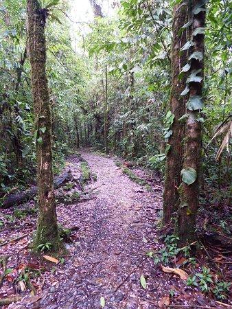 Bajos del Toro, Costa Rica: Alfombra de flores
