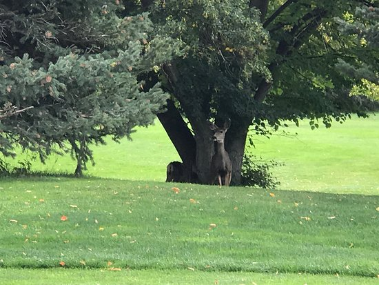 Midway, UT: Deer on Lakes Course