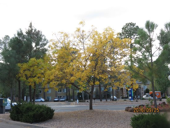 Pinetop-Lakeside, AZ: Pretty grounds