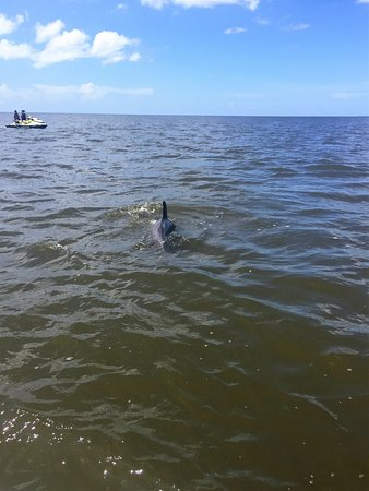 Splittin Waves: Dolphins between our two jet skis