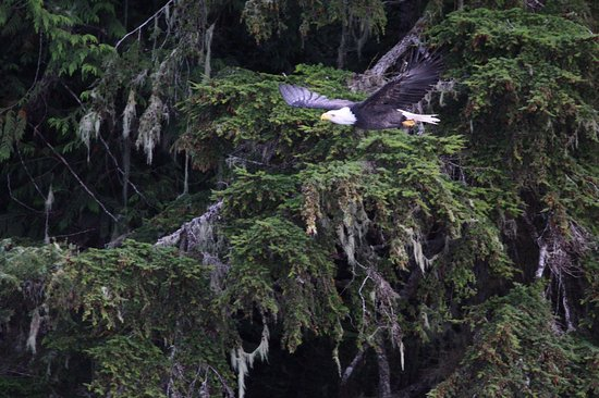 Campbell River, Canadá: IMG-20161012-WA0032_large.jpg