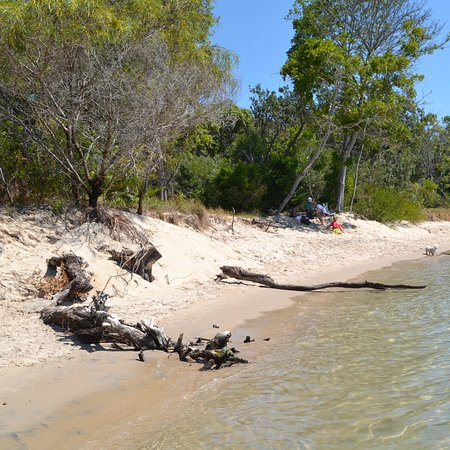 Noosaville, Australia: Dog beach with driftwood