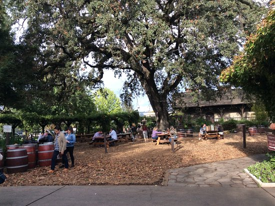 St. Helena, كاليفورنيا: Beautiful tree