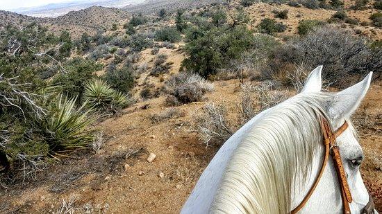 Foto de Yucca Valley