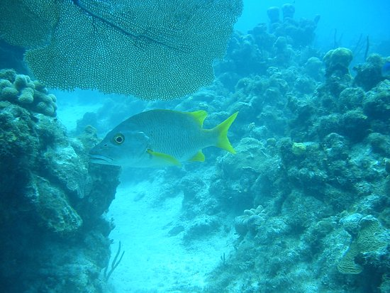 George Town, Grand Cayman: Beautiful underwater scenery and sea life