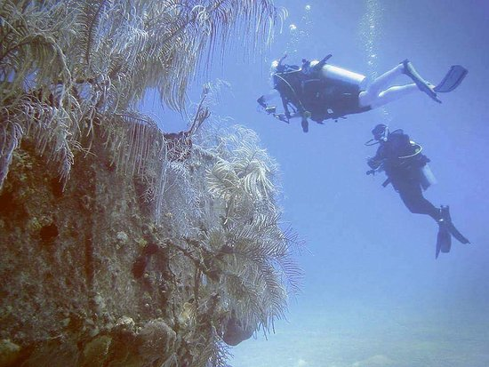 George Town, Grand Cayman: Diving along the top of the deep wall