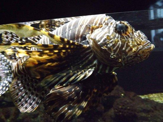 Dragon fish in your face billede af kattegatcentret for 99 5 the fish
