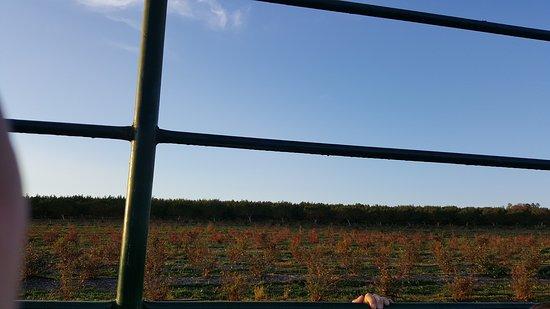 เชสเตอร์, นิวเจอร์ซีย์: Nice fields
