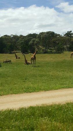 Νότια Αυστραλία, Αυστραλία: 20161019_120854_large.jpg