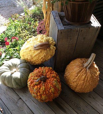 Sautee Nacoochee, จอร์เจีย: Pumpkin display