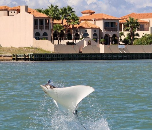 Dolphin Whisper Tours South Padre Island