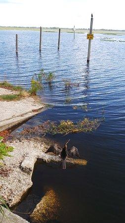 Kissimmee, FL: We saw plenty of water birds