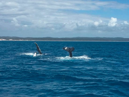 Hervey Bay, Australien: Mum with baby learning to whale