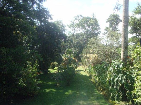 Agouti Paca B&B Farm