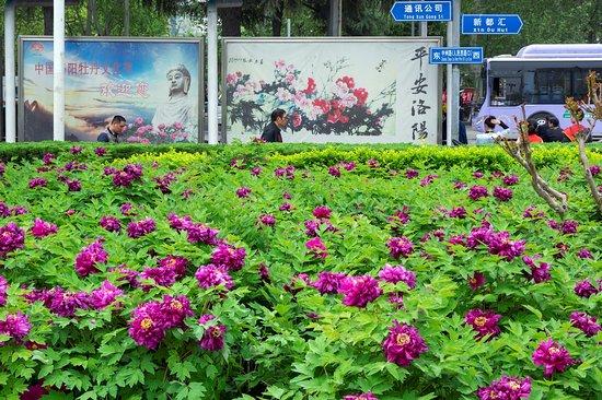 Luoyang Resmi