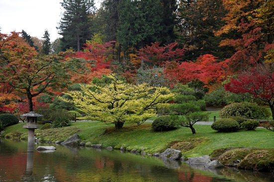 Koi picture of seattle japanese garden seattle for Japanese garden colors