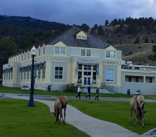Elk on lawn picture of mammoth hot springs hotel for Mammoth hot springs hotel cabins