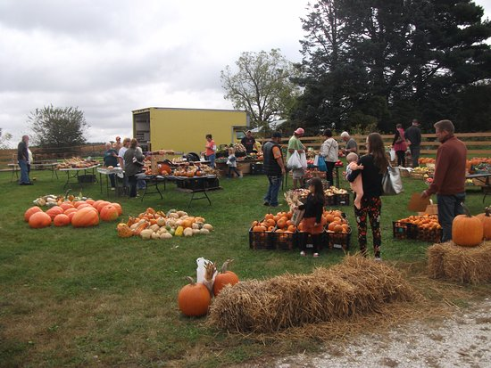 Knoxville, IL: Pumpkin market at the Festival