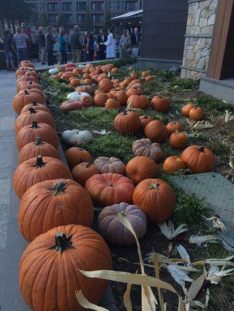 Truckee, Califórnia: The pumpkin patch