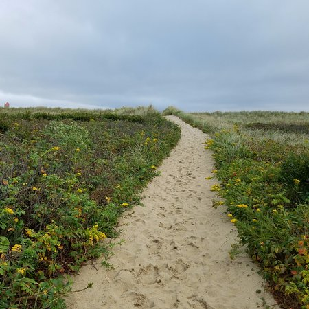 West Tisbury, MA: Trail leading to beach.