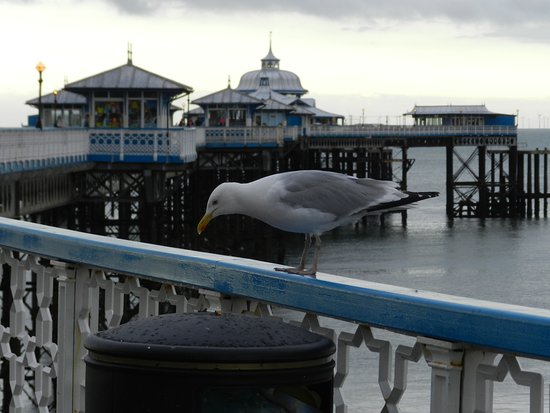Llandudno Pier: Local wildlife drops by