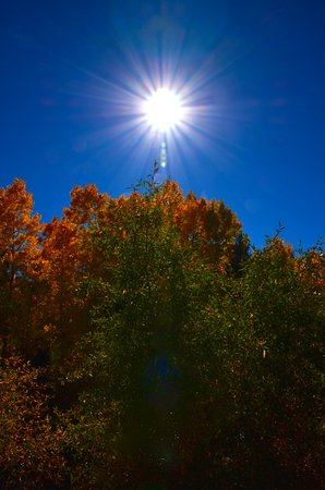 Fairplay, CO: The sun, blue skies and yellow aspens were a wonderful combination