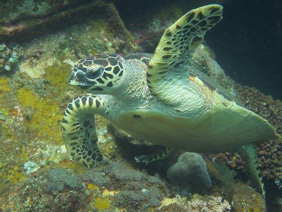 wreck dive tulamben with tulambendivers.com
