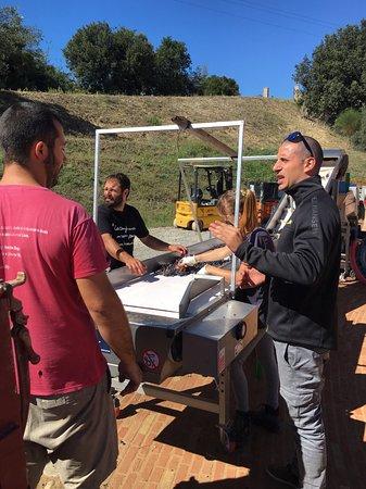 Montalcino, Italia: Sebastian, the winemaker, directing the harvest.