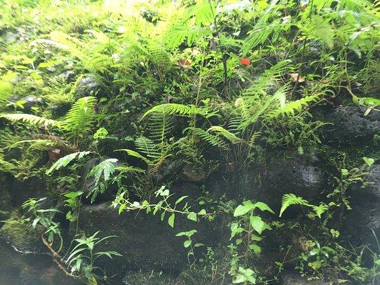 Hanamaulu 사진
