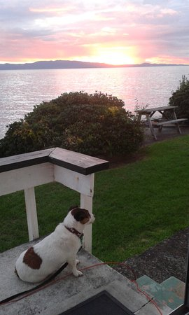 Coromandel Peninsula, Selandia Baru: This is my pooch enjoying the sunset over the Firth of Thames.