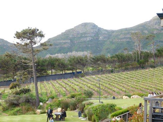 Noordhoek, South Africa: Vineyards
