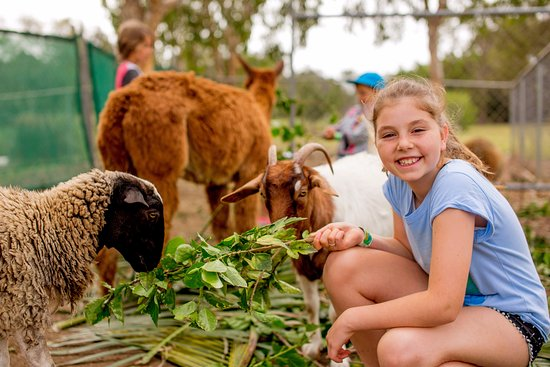 Helensvale, Australia: Petting Zoo