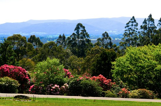 Olinda, Australien: The nearby huge National Rhododendron garden is one of the best in the world.