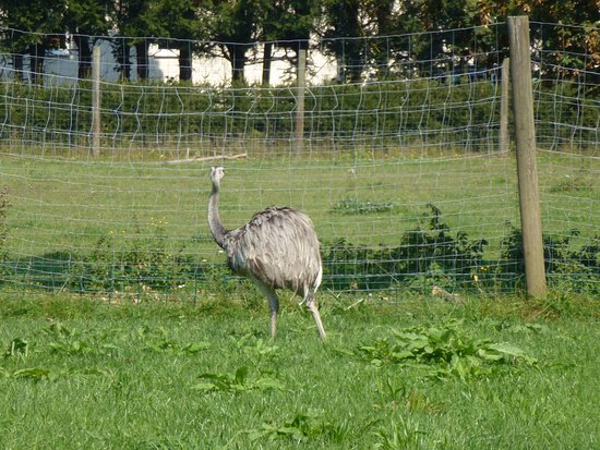 Rosegg, Austria: A kind of ostrich